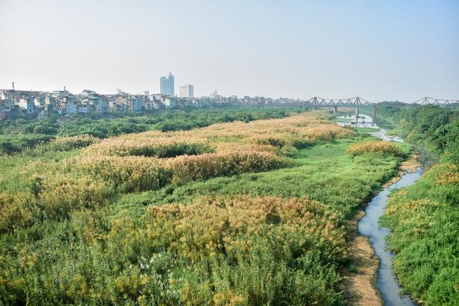Lạc vào cánh đồng cỏ lau đẹp như xứ sở thần tiên dưới chân cầu Long Biên - 6