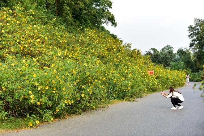 Giới trẻ đua nhau lên núi Ba Vì săn hoa dã quỳ - 7