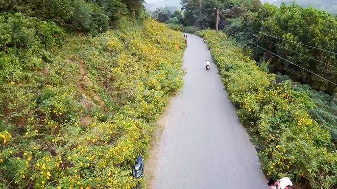 Giới trẻ đua nhau lên núi Ba Vì săn hoa dã quỳ - 11