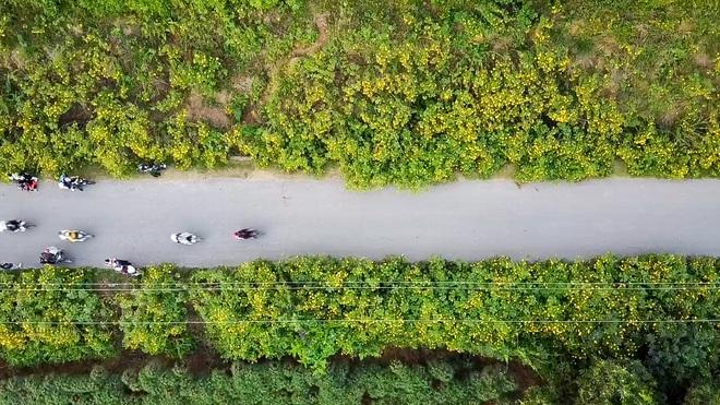 Giới trẻ đua nhau lên núi Ba Vì săn hoa dã quỳ - 8