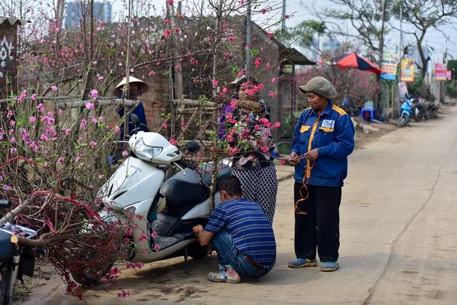 Đào Nhật Tân bung nở, rụng đỏ gốc: Khách kéo nhau chụp ảnh, nông dân thẫn thờ lo trắng tay - 16