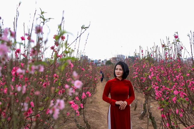Đào Nhật Tân bung nở, rụng đỏ gốc: Khách kéo nhau chụp ảnh, nông dân thẫn thờ lo trắng tay - 5
