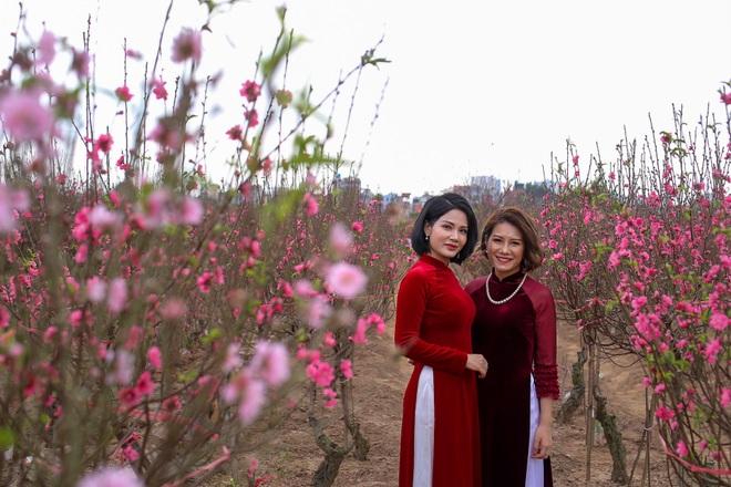 Đào Nhật Tân bung nở, rụng đỏ gốc: Khách kéo nhau chụp ảnh, nông dân thẫn thờ lo trắng tay - 6