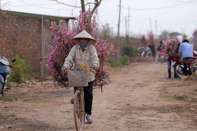Đào Nhật Tân bung nở, rụng đỏ gốc: Khách kéo nhau chụp ảnh, nông dân thẫn thờ lo trắng tay - 14