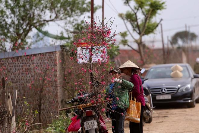 Đào Nhật Tân bung nở, rụng đỏ gốc: Khách kéo nhau chụp ảnh, nông dân thẫn thờ lo trắng tay - 17