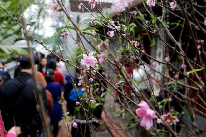 Cảnh lễ đền dưới mưa xuân tuyệt đẹp ở Hà Nội ngày mùng 1 Tết - 13