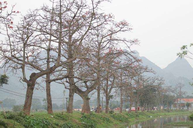 Hoa gạo nhuộm đỏ những góc trời ở ngoại thành Hà Nội - 5