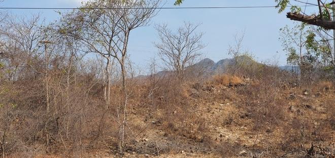 Người dân Ninh Thuận quay quắt trong cơn hạn hán kéo dài - 23
