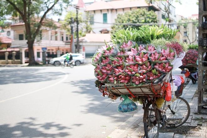 Hà Nội: Ngẩn ngơ với sắc sen đầu mùa xuống phố - 10