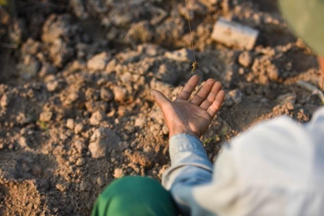 Câu con lộc trời cho: nông dân Hải Dương kiếm nửa triệu đồng mỗi ngày - 8