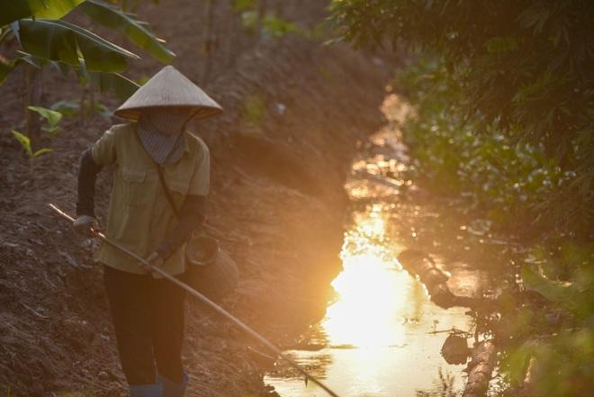 Câu con lộc trời cho: nông dân Hải Dương kiếm nửa triệu đồng mỗi ngày - 13