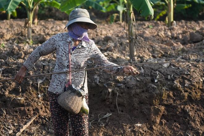 Câu con lộc trời cho: nông dân Hải Dương kiếm nửa triệu đồng mỗi ngày - 16