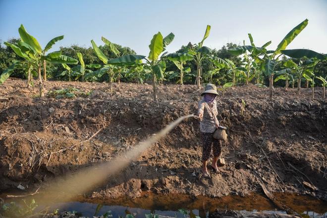 Câu con lộc trời cho: nông dân Hải Dương kiếm nửa triệu đồng mỗi ngày - 15