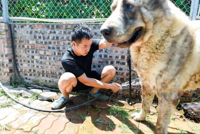9x cực nhọc chống nóng cho đàn chó khổng lồ giá hàng trăm triệu đồng - 5