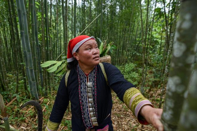 Băng rừng theo người Dao đỏ Sapa đi hái lá thuốc tắm thần dược - 15