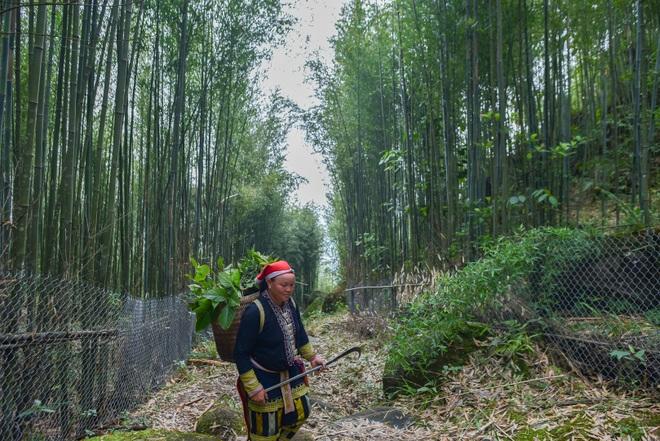 Băng rừng theo người Dao đỏ Sapa đi hái lá thuốc tắm thần dược - 9