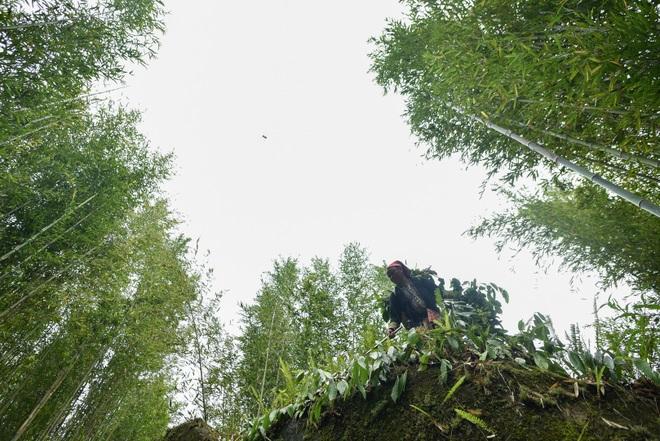 Băng rừng theo người Dao đỏ Sapa đi hái lá thuốc tắm thần dược - 14
