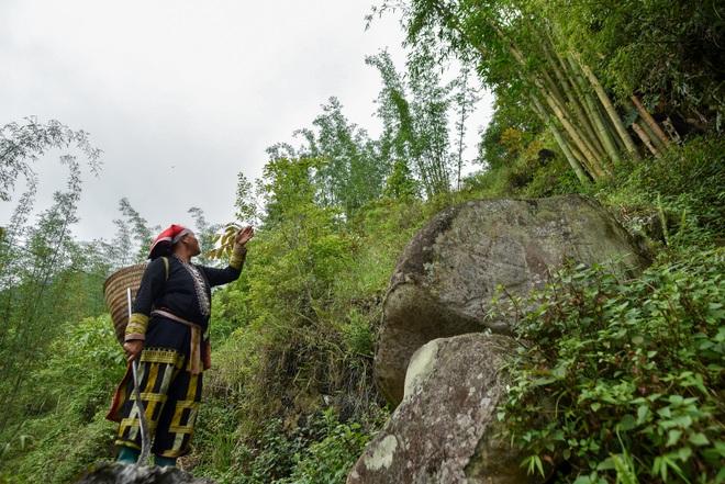 Băng rừng theo người Dao đỏ Sapa đi hái lá thuốc tắm thần dược - 11
