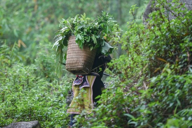 Băng rừng theo người Dao đỏ Sapa đi hái lá thuốc tắm thần dược - 17
