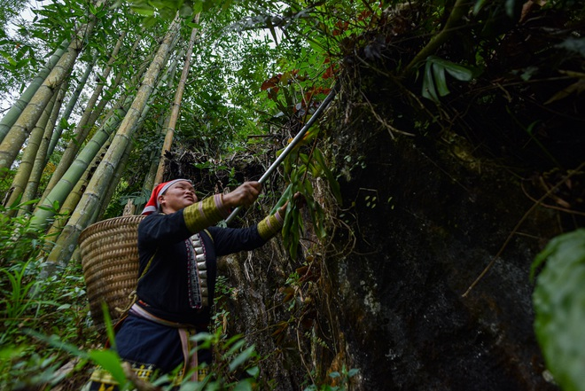 Băng rừng theo người Dao đỏ Sapa đi hái lá thuốc tắm thần dược - 12