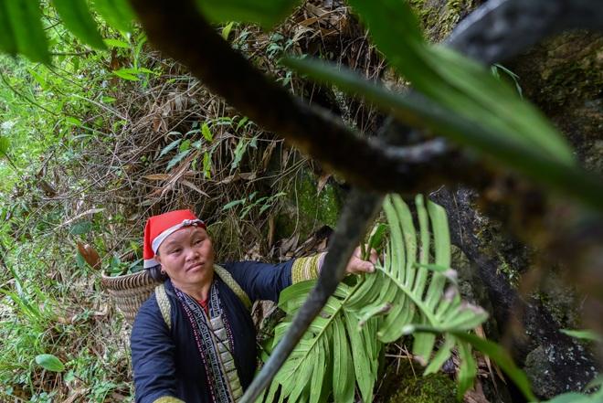 Băng rừng theo người Dao đỏ Sapa đi hái lá thuốc tắm thần dược - 13
