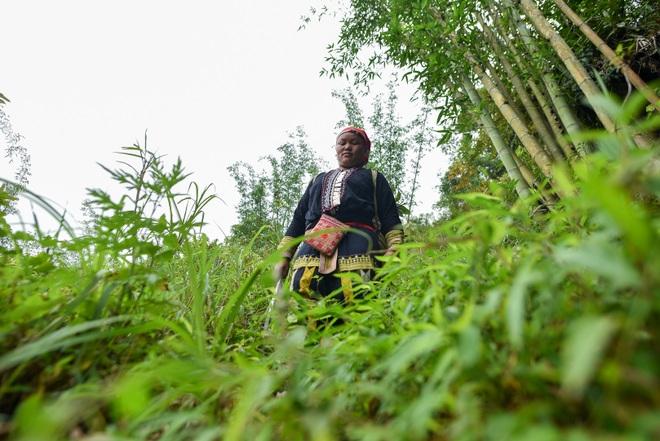 Băng rừng theo người Dao đỏ Sapa đi hái lá thuốc tắm thần dược - 18