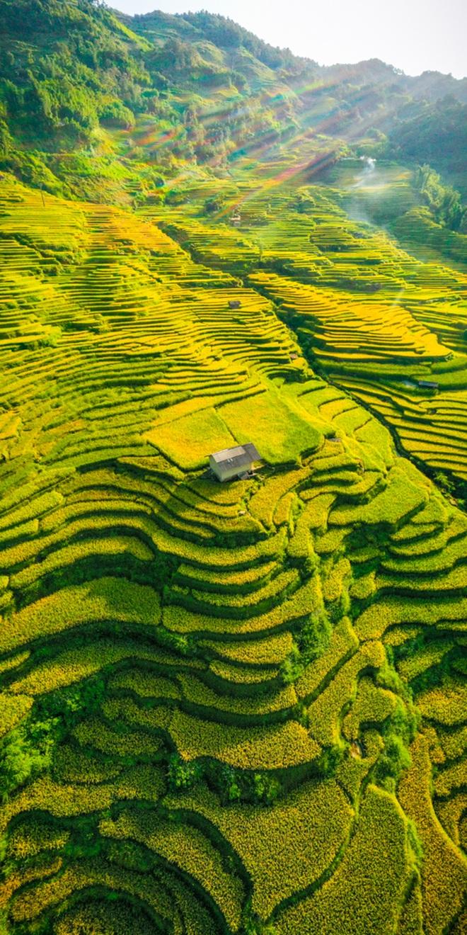 Mùa vàng Y Tý nhìn từ camera bay - 5
