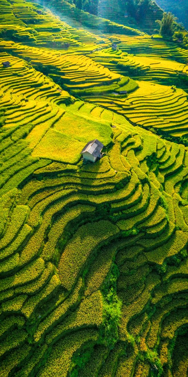 Mùa vàng Y Tý nhìn từ camera bay - 4