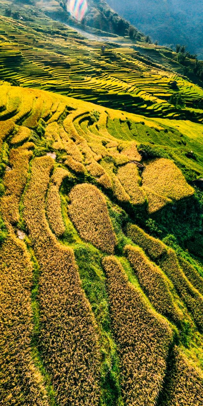 Mùa vàng Y Tý nhìn từ camera bay - 3