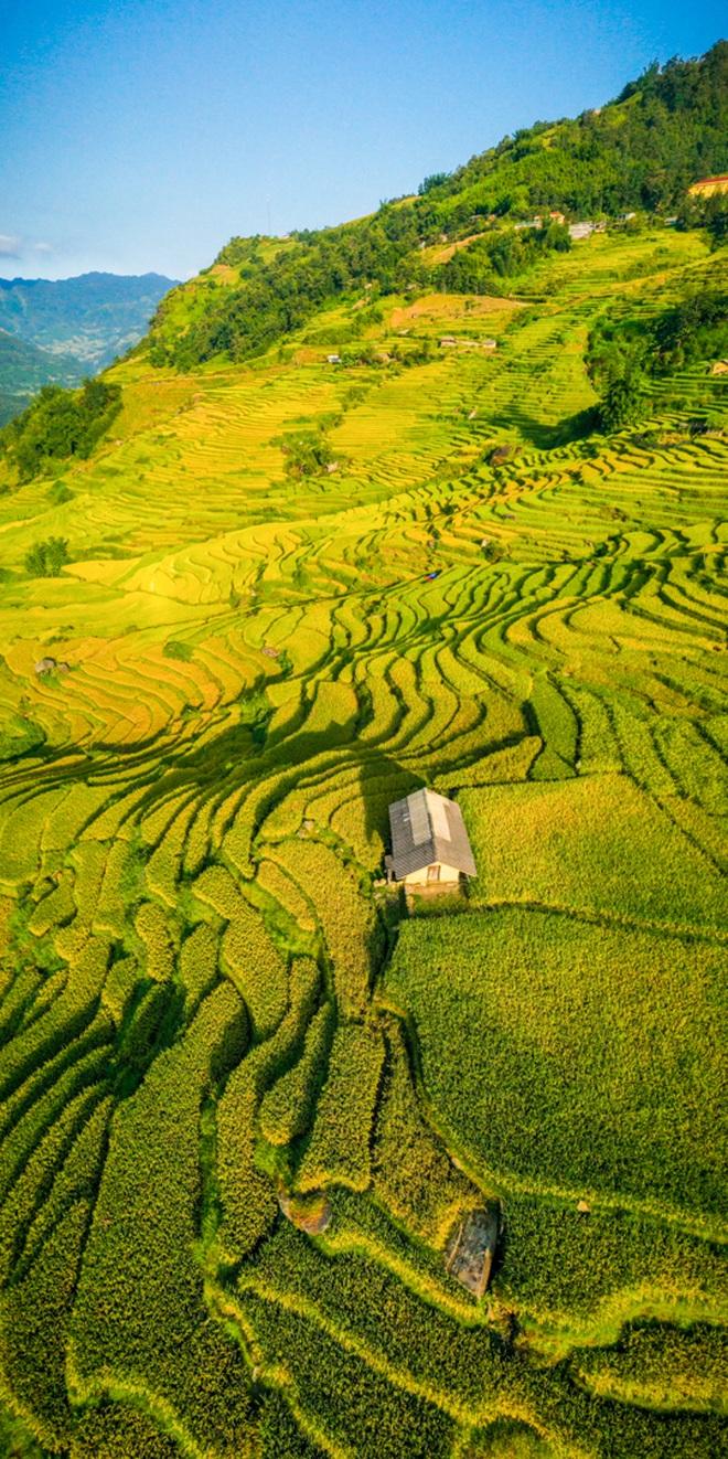 Mùa vàng Y Tý nhìn từ camera bay - 9