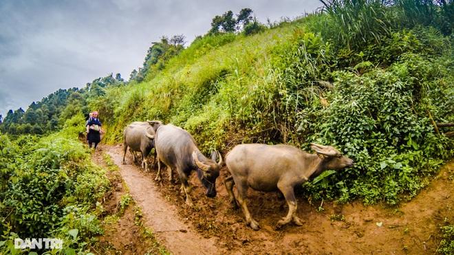 Chạy bộ khám phá vẻ đẹp rực rỡ của những bản làng Mù Cang Chải - 16