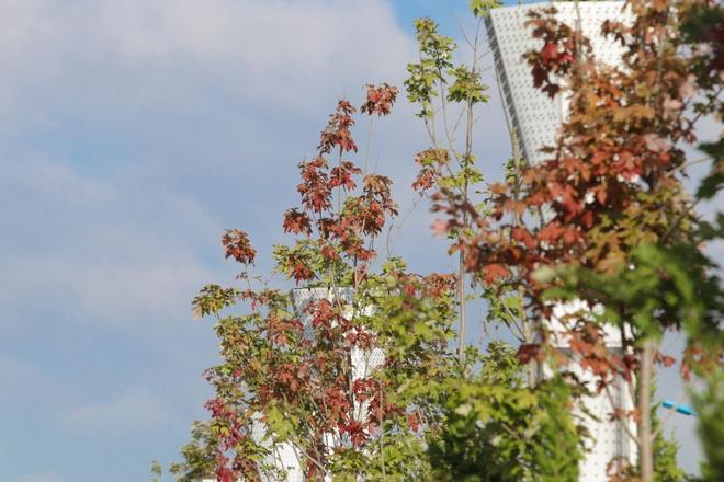 Ngắm phong lá đỏ chuyển màu rực rỡ ở cao nguyên đá vôi cao thứ 2 Việt Nam - 7