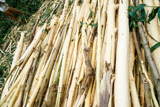 Nông dân Huế hối hả thu hoạch keo lá tràm chạy bão - 7