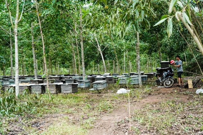 Nỗi khốn khổ của người nuôi ong sau bão lũ - 5