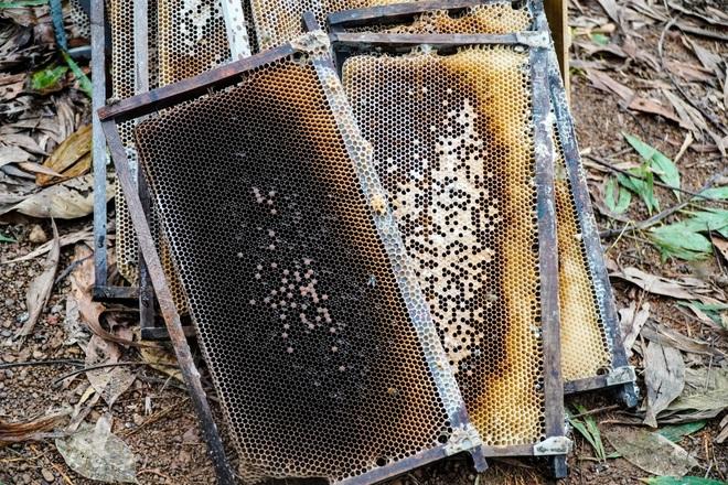 Nỗi khốn khổ của người nuôi ong sau bão lũ - 3