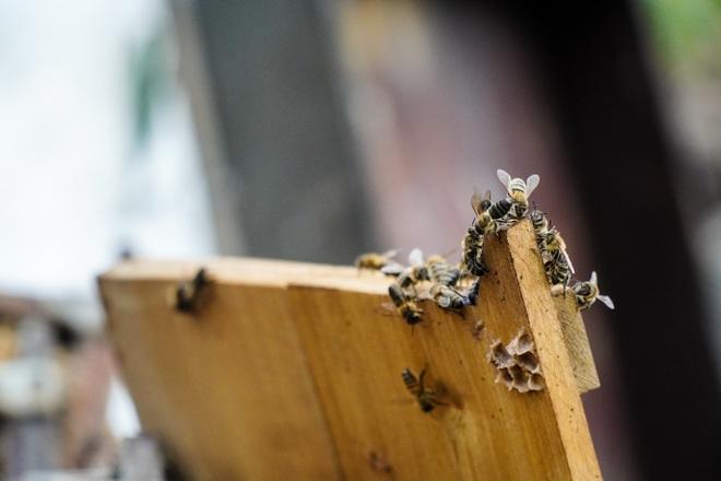 Nỗi khốn khổ của người nuôi ong sau bão lũ - 8