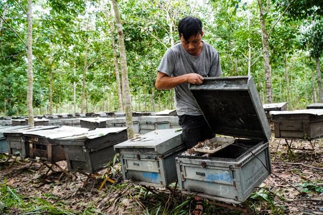 Nỗi khốn khổ của người nuôi ong sau bão lũ - 4