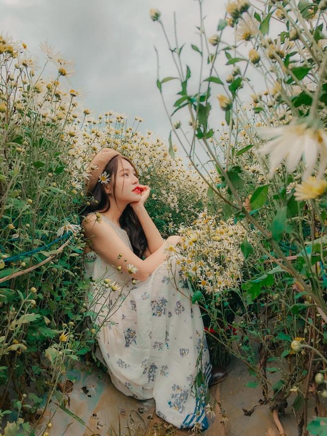 Ngẩn ngơ ngắm cánh đồng cúc họa mi giữa cao nguyên Mộc Châu - 6