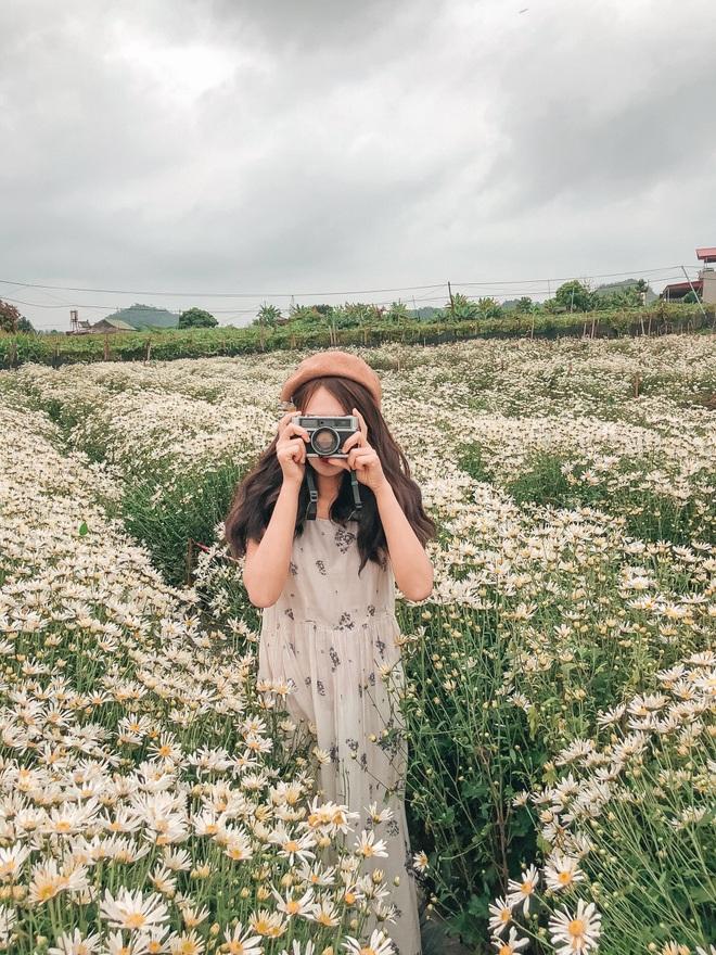 Ngẩn ngơ ngắm cánh đồng cúc họa mi giữa cao nguyên Mộc Châu - 4