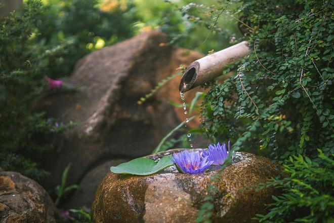 Hơi ấm lúc hoàng hôn trong khu vườn Sala - 9