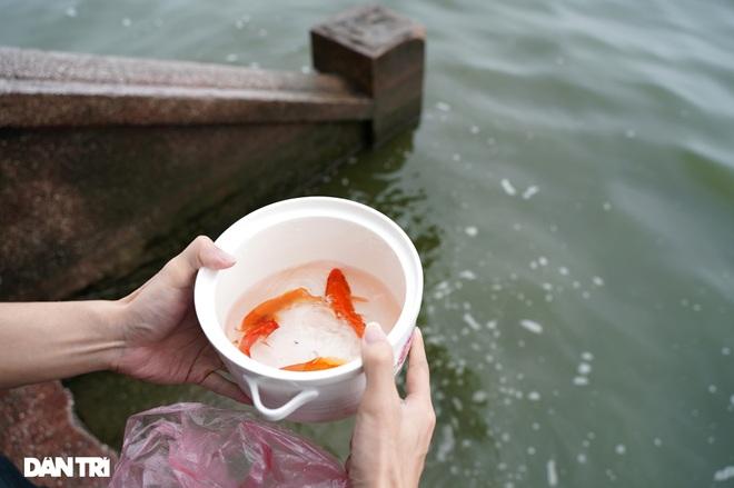 Mùa Covid: Vắng vẻ cảnh thả cá chép ngày tiễn ông Táo lên chầu trời - 13