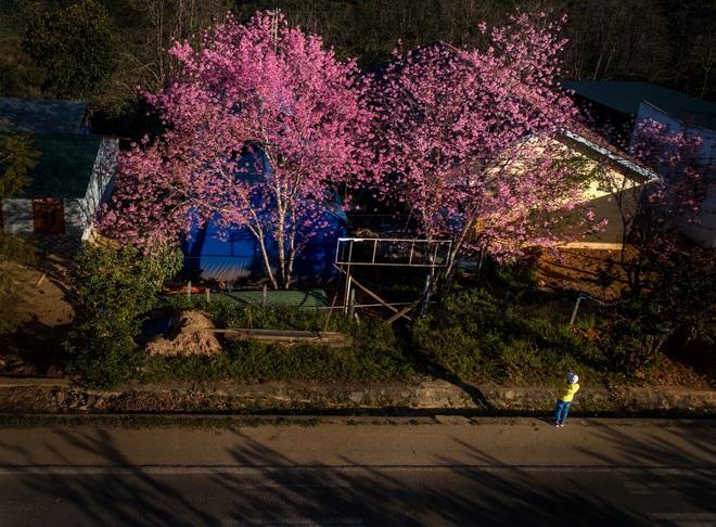 Mùa xuân Tân Sửu ngập tràn tình yêu và hy vọng qua Cuộc thi ảnh báo Dân trí - 12