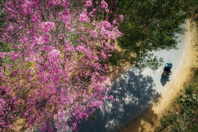 Mùa xuân Tân Sửu ngập tràn tình yêu và hy vọng qua Cuộc thi ảnh báo Dân trí - 13