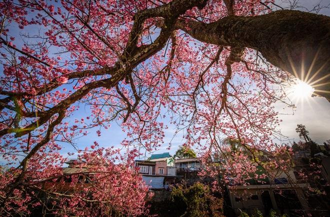 Mùa xuân Tân Sửu ngập tràn tình yêu và hy vọng qua Cuộc thi ảnh báo Dân trí - 11