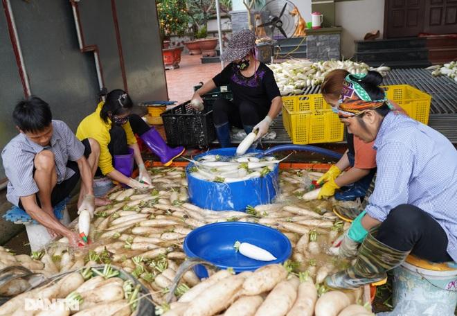 Không được giải cứu như Hải Dương, trăm tấn củ cải, cà chua ế hỏng ở Hà Nội - 14