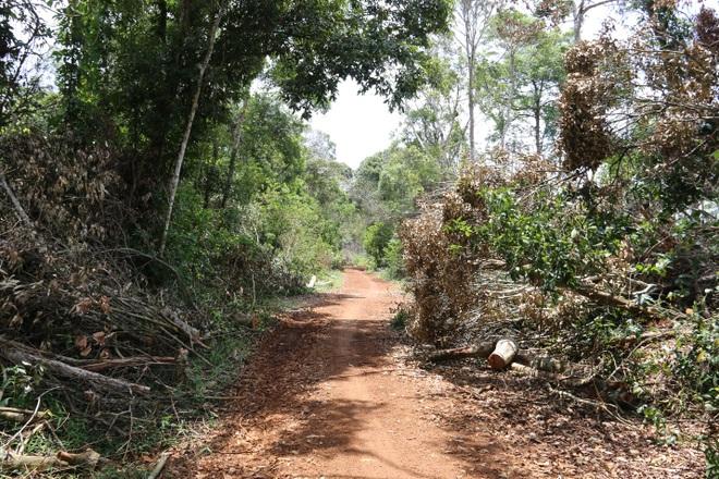 Đăk Nông: Rầm rộ phá rừng để chiếm đất trồng cây, dựng nhà trái phép - 1
