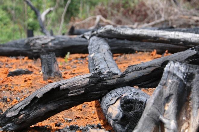 Đăk Nông: Rầm rộ phá rừng để chiếm đất trồng cây, dựng nhà trái phép - 4
