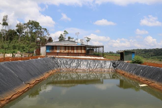 Đăk Nông: Rầm rộ phá rừng để chiếm đất trồng cây, dựng nhà trái phép - 5