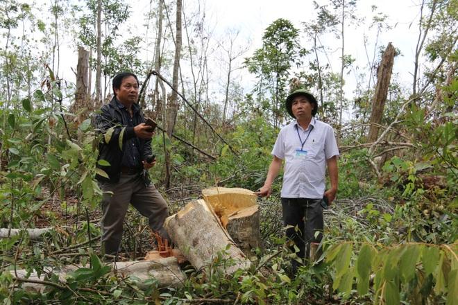 Đăk Nông: Rầm rộ phá rừng để chiếm đất trồng cây, dựng nhà trái phép - 8
