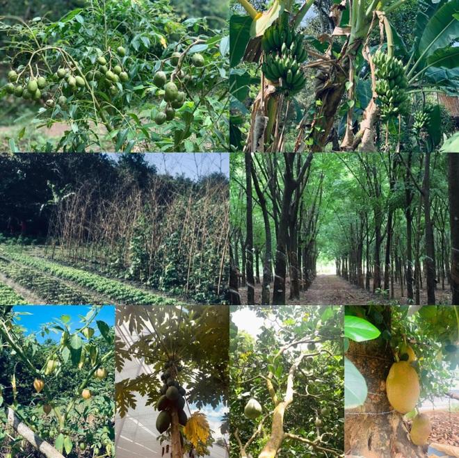 Vườn sai trĩu quả của 9X Bình Phước bỏ phố về quê nối nghiệp cha - 1